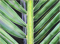 IMG_2224_edited_coconut_palm_frond_30x40_edited-1_fs