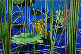 Image 4 - Everglades Series II - Lilies and Saw Grass