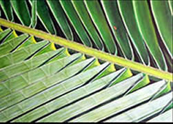 Image 25 - Conconut Palm Frond II