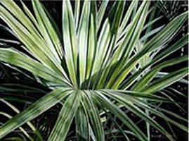 Image 20 - Small Palm Frond