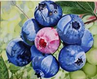 blueberries_fs